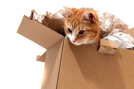 inquisitively: cat in removal box