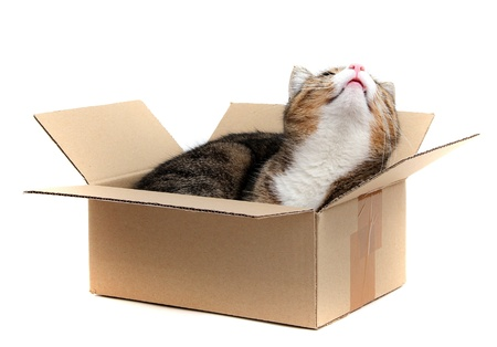 little cat in paperbox photo
