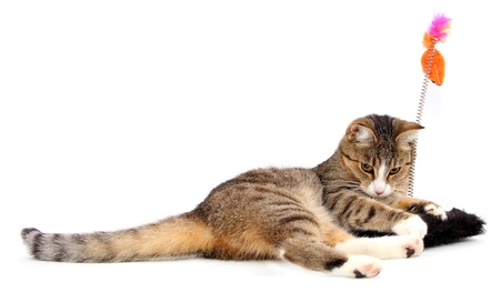 playing cat Stock Photo