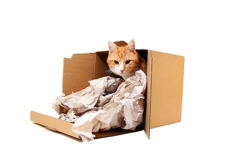 tomcat in cardboard