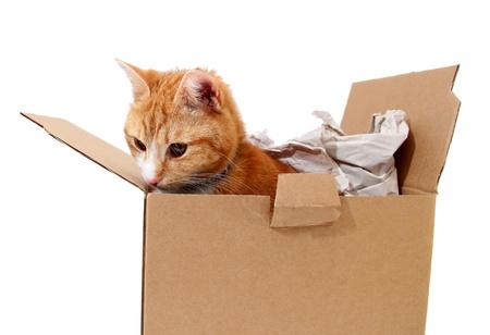 snoopy tomcat in cardboard photo