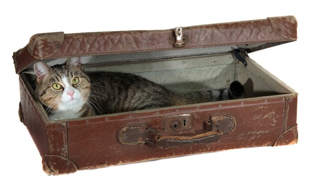 antiquarian: snoopy pet in antiquarian case Stock Photo