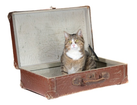 inquisitively: little cat sitting in old suitcase