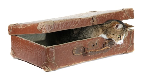 inquisitively: hungry pet in old brown suitcase