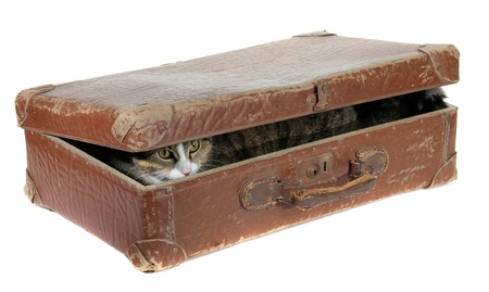 cute cat covered in old suitcase Stock Photo - 12365388