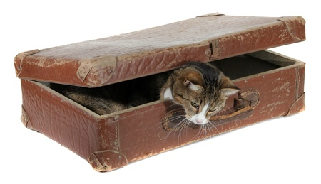 inquisitively: inquisitively pet in old suitcase