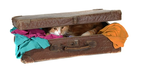 inquisitively: closed suitcase with clothes and cute tomcat