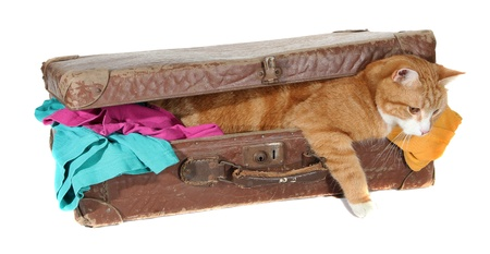 snoopy tomcat in old suitcase with clothes photo