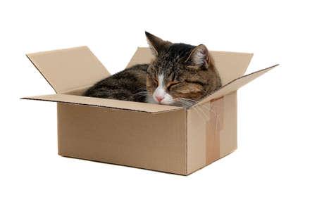cute cat in removal box photo