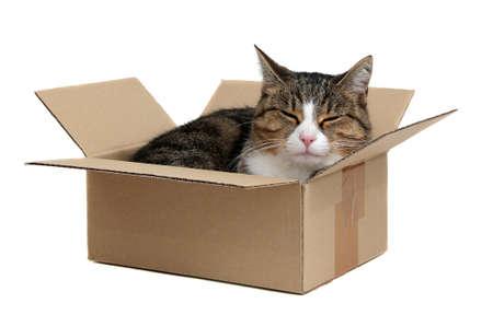 relaxing cute cat in box