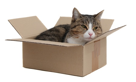 snoopy cat in removal box photo