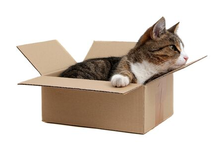 inquisitively: snoopy little cat in box