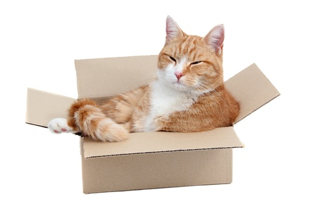 relaxing cute tomcat in box photo