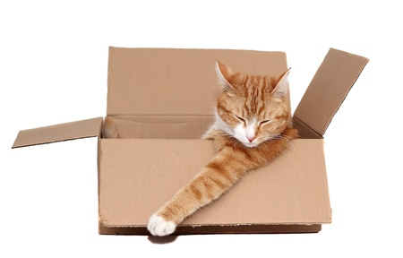 sleeping cute tomcat in removal box photo