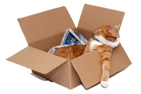 relaxed tomcat in removal box photo