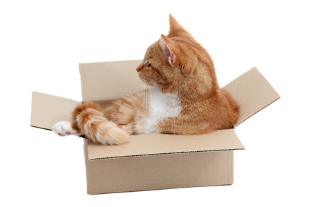 inquisitively: snoopy tomcat in removal box Stock Photo