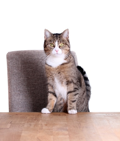 inquisitively: cute cat on table