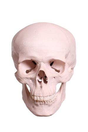 skull Stock Photo - 17323906