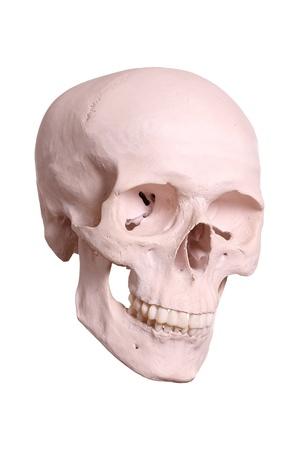 spooky skull Stock Photo - 17323927
