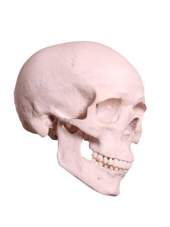 spooky cranium Stock Photo - 17323930