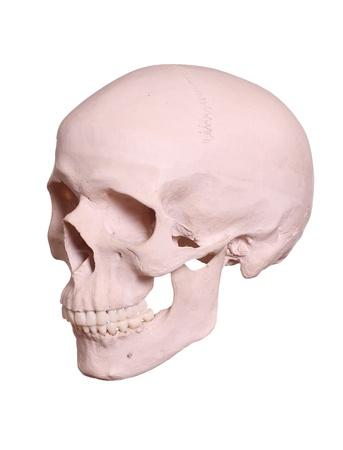 isolated cranium Stock Photo