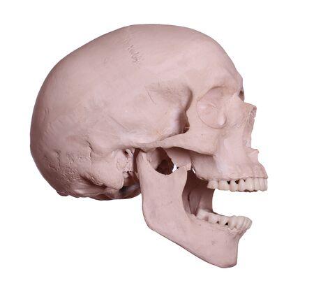screaming skull Stock Photo - 17612211