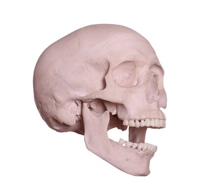 screaming skull on white Stock Photo - 17612195