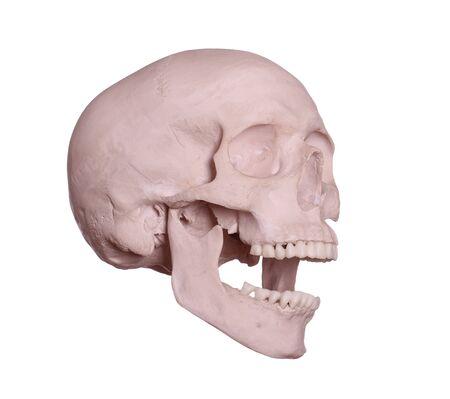screaming skull on white Stock Photo - 17612195