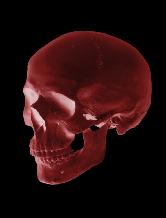 isolated red cranium Stock Photo - 17612233