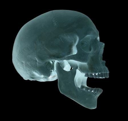 spooky screaming blue skull Stock Photo - 17612212