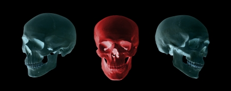 blue and red skulls photo