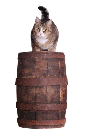 cute cat sitting on wooden barrel photo