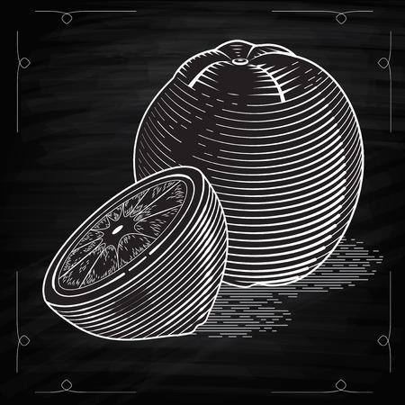 designe: Illustration of fresh orange. Vector vintage fruit. Stylized drawing hands. Engraving image of food. Drawing with chalk on Chalkboard drawing for cafe designe
