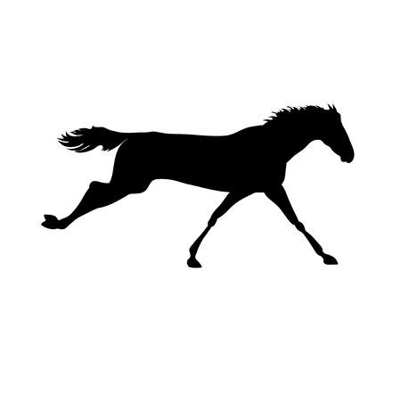caballo negro: Im�genes vectoriales caballos. Dibujos de la silueta del caballo. carteles de caballos. Ejecuci�n de la silueta del caballo. Silueta de una cabeza de caballo
