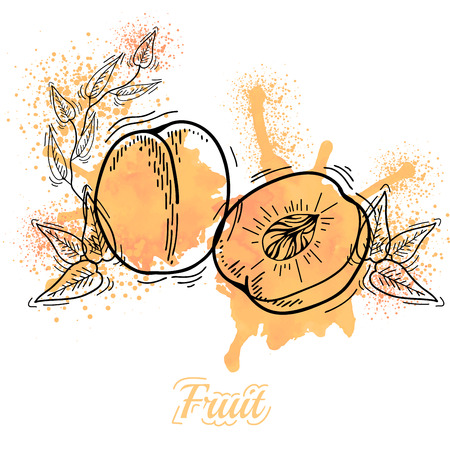 single color image: Watercolor drawing fruit. Vector illustration. Fruits. Vector fruits at engraving style. Hand drawn illustrations of fruits. Fruit in sketch style Illustration