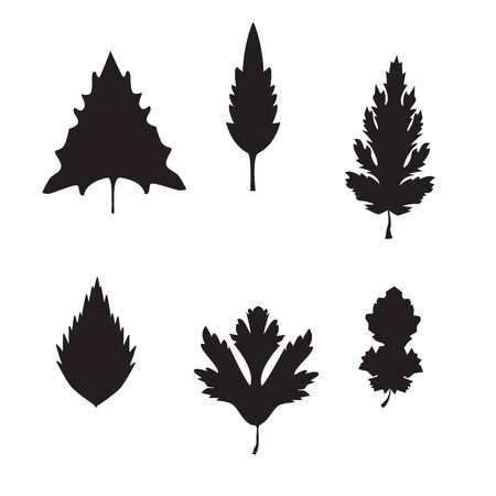 Collection of leaves and branches. set of Herbarium of the different leaves and branches. Collection of leaves. leaves on isolated background. Leaves silhouette Illustration