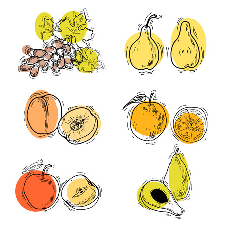 apple clipart: Vector illustration. Fruits. Vector fruits at engraving style. Hand drawn illustrations of fruits. Fruit in sketch style. Vector apple, peach, orange, pear, avocado, grapes Illustration