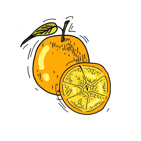 freehand drawing: Freehand drawing fruit. Illustration