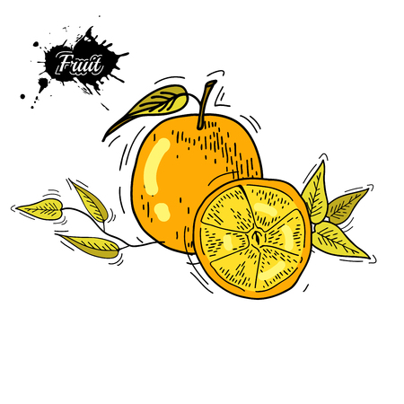 single color image: Freehand drawing fruit. Illustration