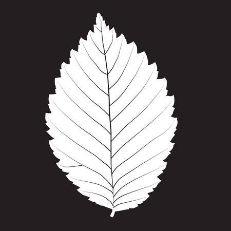 single leaf: Black and white colors leaf. Realistic shape leaf isolated on blackboard. Vector silhouette leaf. Vector single leaf icon, symbol. Natural, floral, tree, botany background Illustration