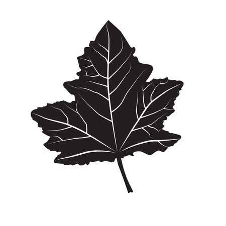 single leaf: Black and white colors leaf. Realistic shape leaf isolated on white background. Vector silhouette leaf. Vector single leaf icon, symbol. Natural, floral, tree, botany background