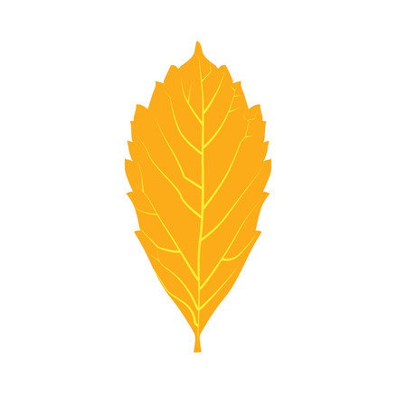 dry leaf: Colorful autumn leaf. Yellow autumn leaf isolated on white background. Orange, dry, leaf symbol. Autumn leaf icon. Vector realistic leaf. Eco, native, natural symbol for background Illustration