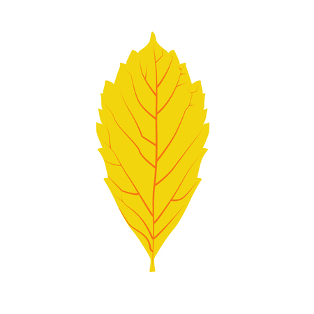 dry leaf: Autumn leaf shape vector. Yellow autumn leaf isolated on white background. Orange dry leaf symbol. Autumn leaf icon. Vector realistic leaf. Nature element for background or design