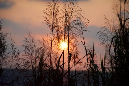 grasses: sunrise over the grasses