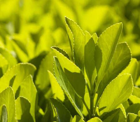 whithe: Los colores de comienzos de primavera, la naturaleza
