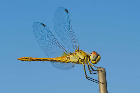Macro dragonfly in the mountains, with blurred background photo