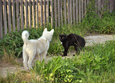 Black cat and white dog