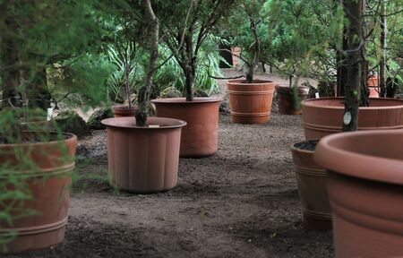 Rows of young trees in plastic pots on the territory of the plant nursery Stock Photo