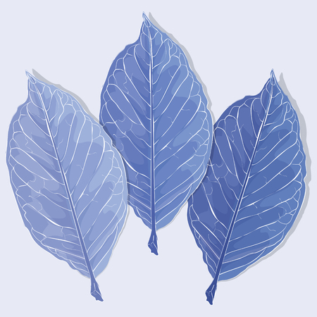 흰 서리: Realistic leaves vector illustration. Autumn frozen fallen leaves.
