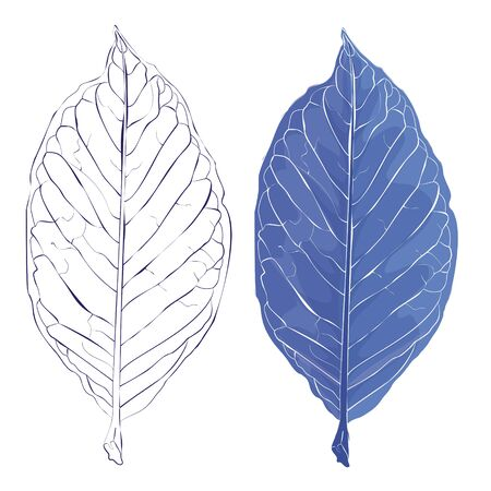 흰 서리: Realistic leaves vector illustration. Autumn frozen fallen leaves.The veins on the leaves of plants.